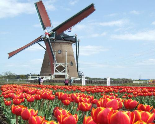 mulino in Olanda
